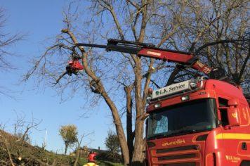 Træfældning Gørlev, Sjælland, beskæring af grene